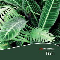Advantage Bali
